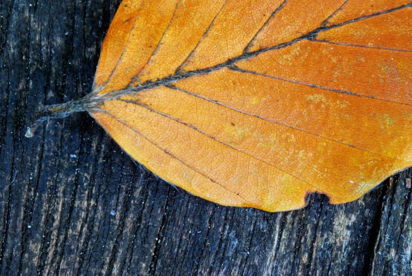 leaf-macro-1385726